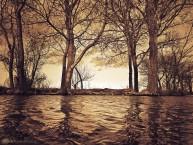 golden lake medium